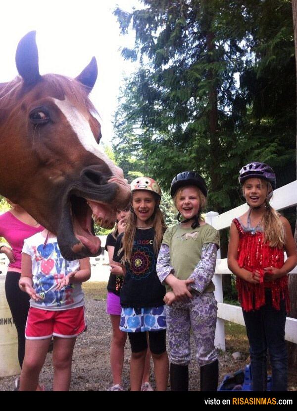 Fotobomba del caballo
