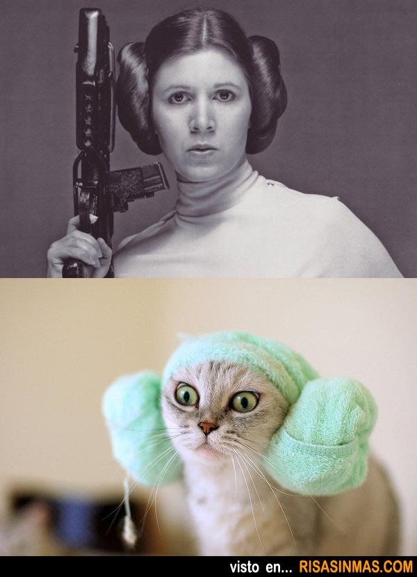 Gata con el peinado de la Princesa Leia