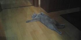 Gato aprendiendo arte dramático