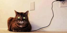Gato cargándose