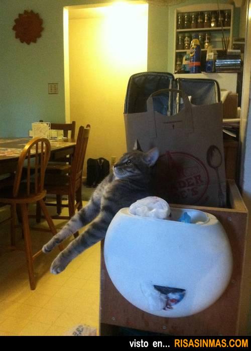 Los gatos y sus cómodos escondites