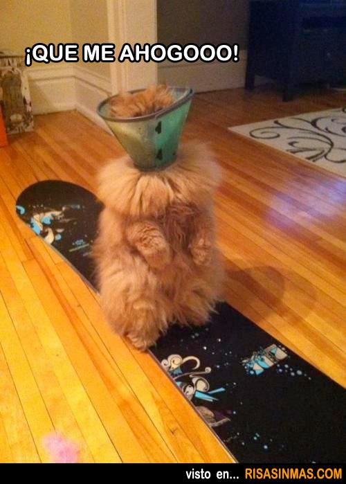 Gato que se ahoga