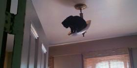 Gato subido en la lámpara