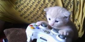 Uno de los mejores jugadores de videojuegos