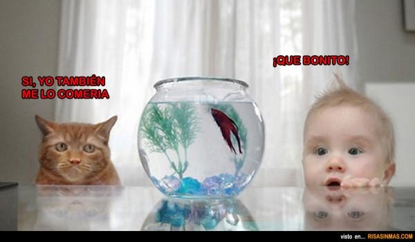 Gato y bebé comparten ideas