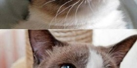 Grumpy cat con Photoshop