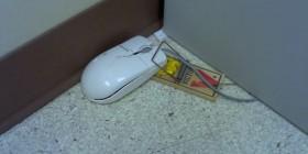 ¡He cazado el ratón!