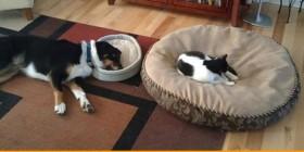 Intercambio de camas