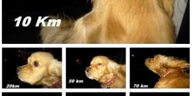 La cara de tu perro según la velocidad de tu coche