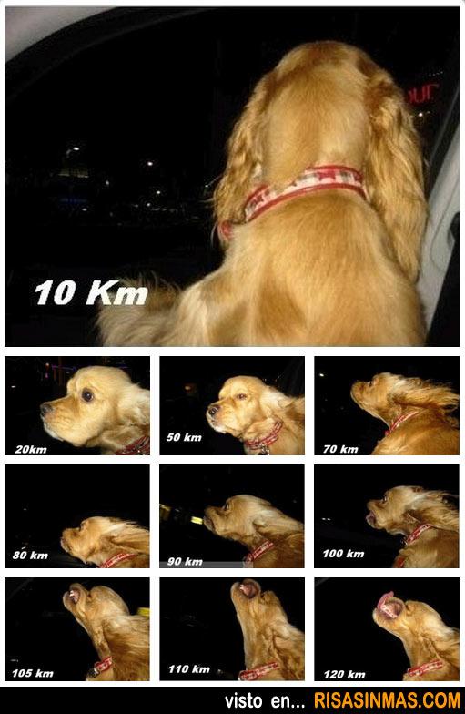 ¿Con que lijar?... La-cara-de-tu-perro-segun-la-velocidad-de-tu-coche