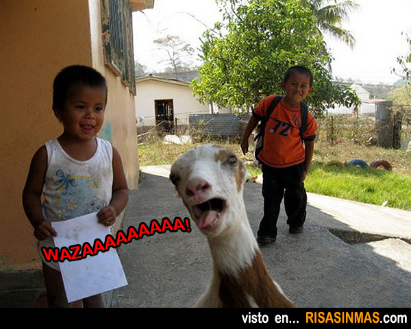 Fotobomba de la cabra