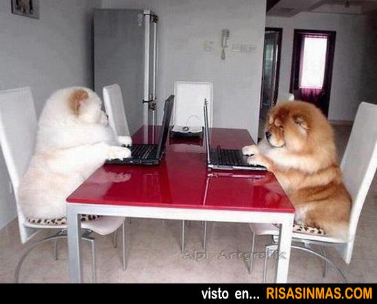 La relación de los perros en la actualidad