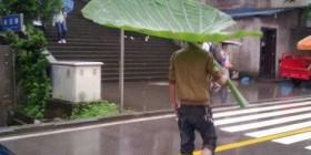 Paraguas natural