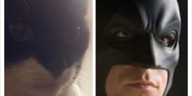 Parecidos razonables: Gato y Batman