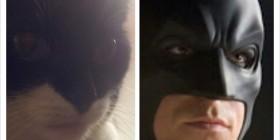 Parecidos razonables: Gato y Batman