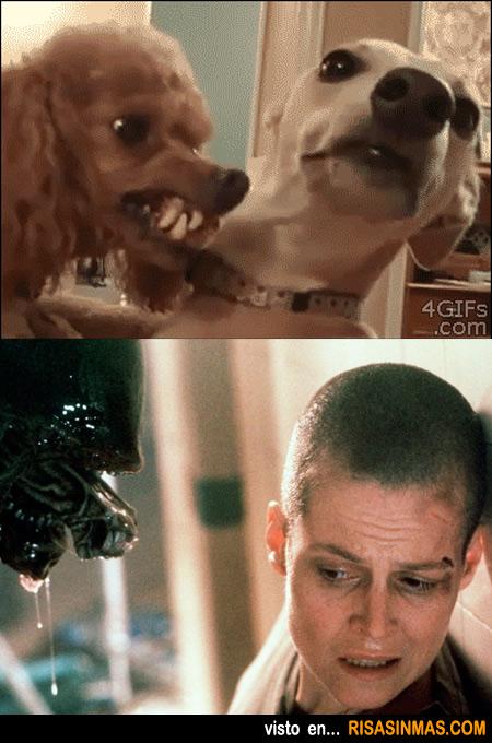 Parecidos razonables: Perro y Alien