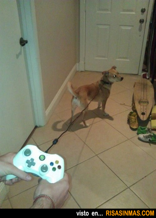 Perro listo