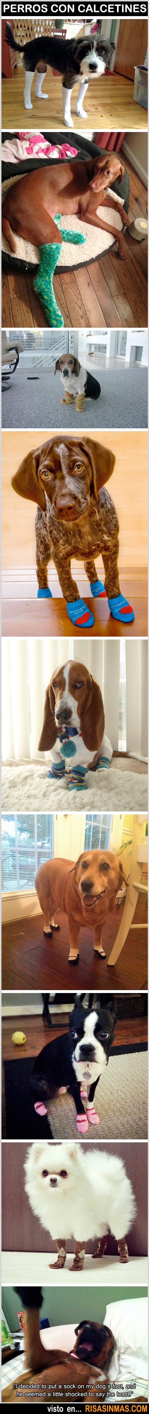 Perros con calcetines