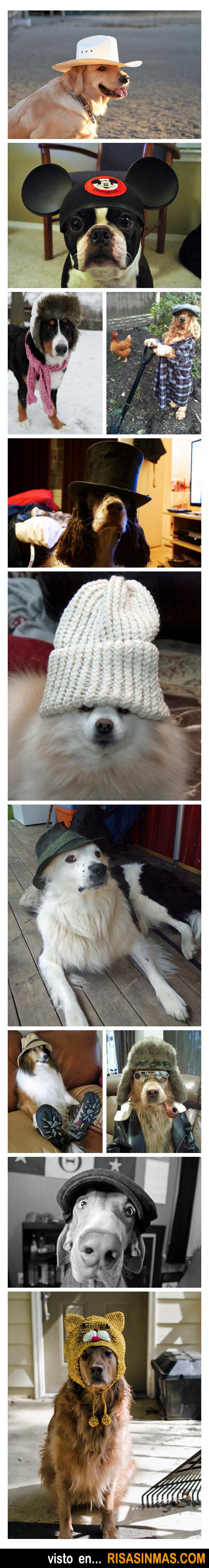 Perros con gorro