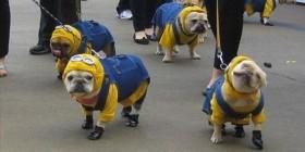 Hasta los perros van de minions