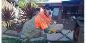 Perros obreros
