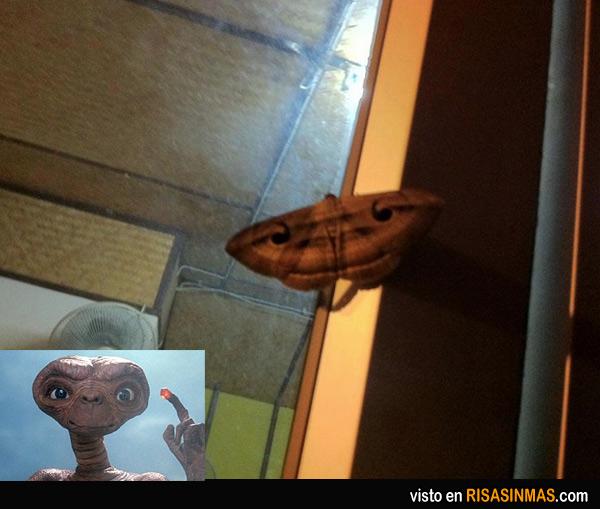 Polilla parecida a ET