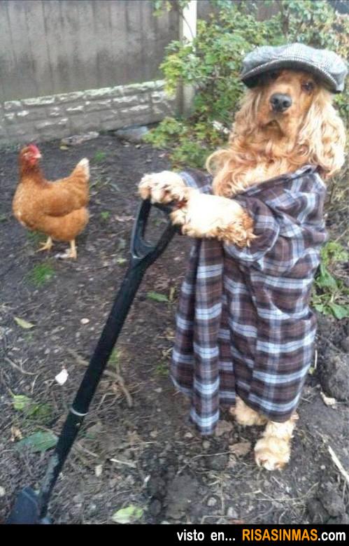 Que duro es trabajar en una granja