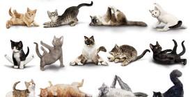 Gatos haciendo yoga