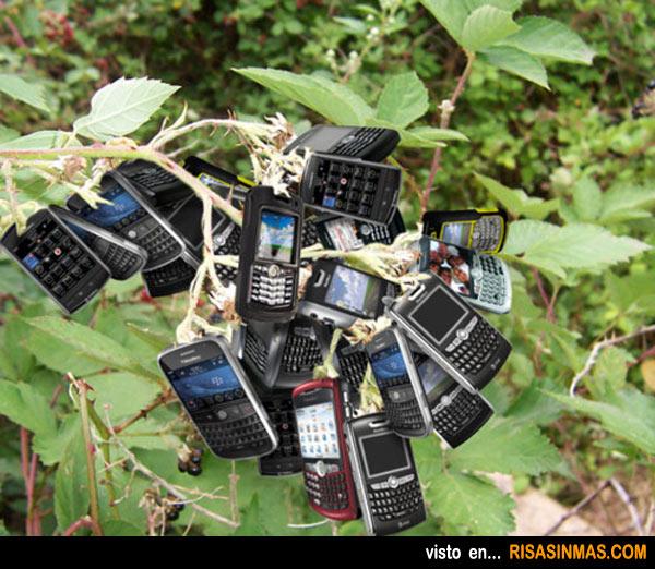 Zarza que florecen móviles