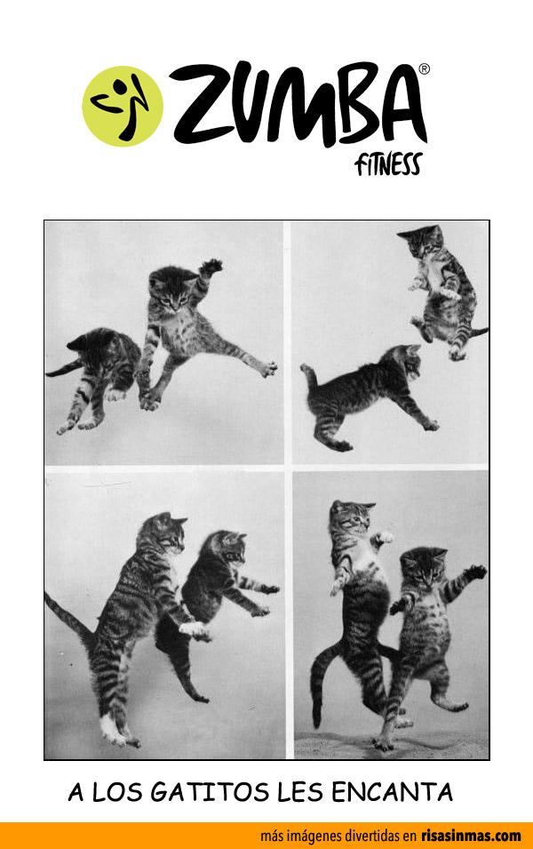 A los gatitos les encanta Zumba