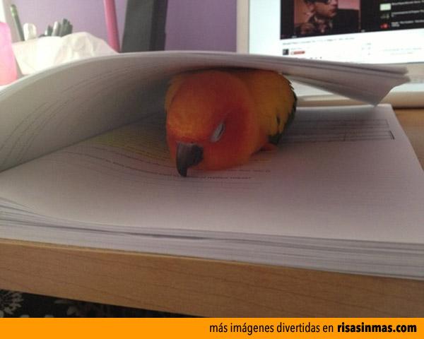 Así terminamos cuando leemos en la cama