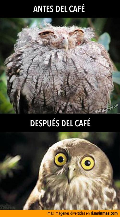 Antes y después del café
