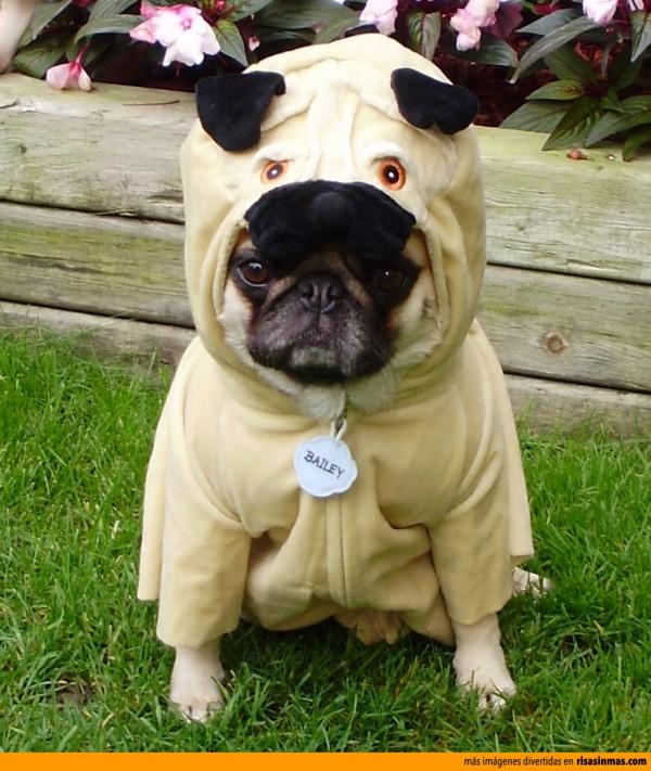 Pug disfrazado de Pug