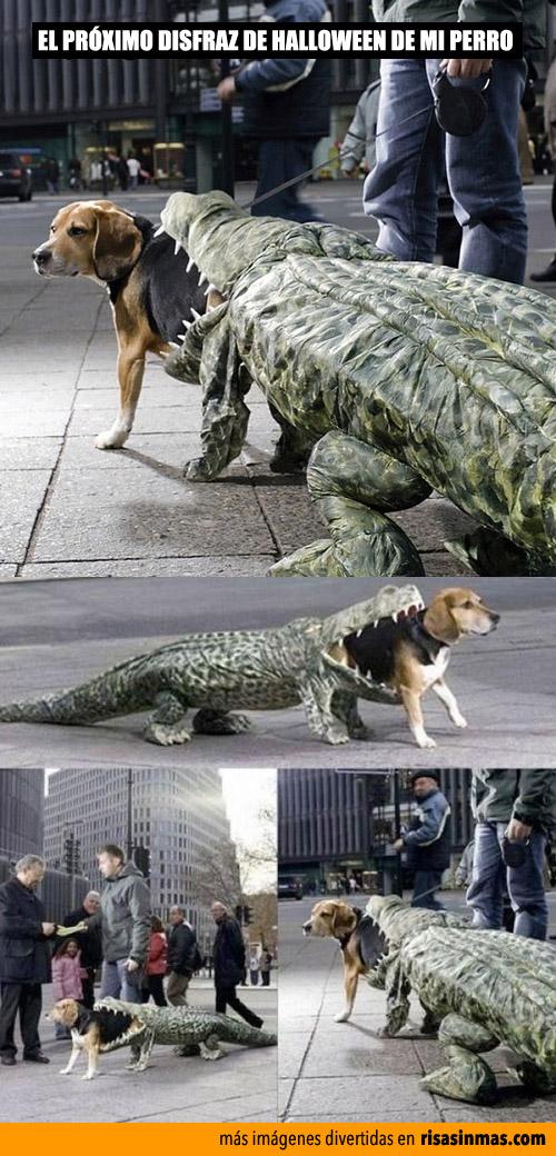 El disfraz para el próximo Halloween de mi perro