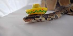 Encontramos a la serpiente de Abierto hasta el amanecer