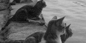 Esperando la vuelta de los pescadores