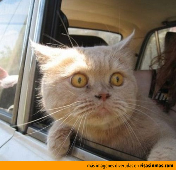 Gato impresionado