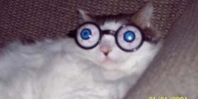 Gato miope