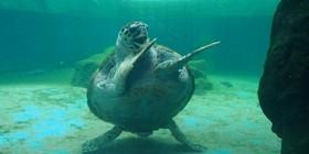 La tortuga bailarina