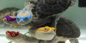 Las verdaderas tortugas ninja