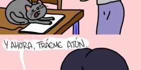 Los gatos pueden ser crueles