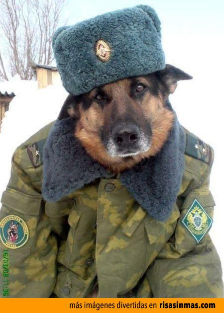 Los perros en Rusia