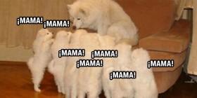 Madre acosada