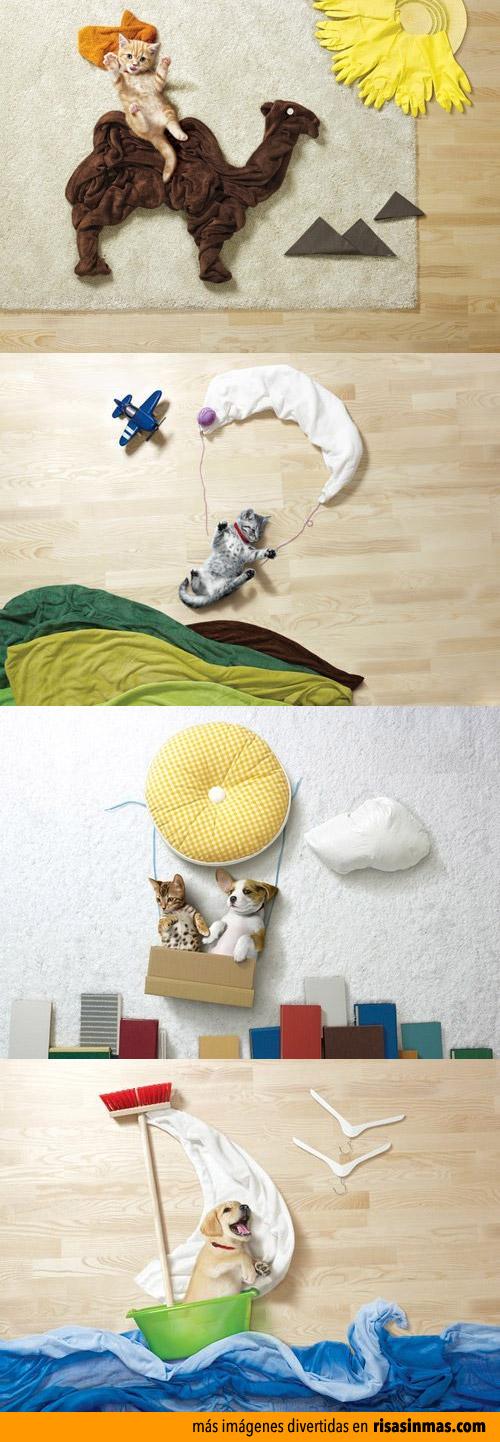 Mascotas protagonistas de cuadros