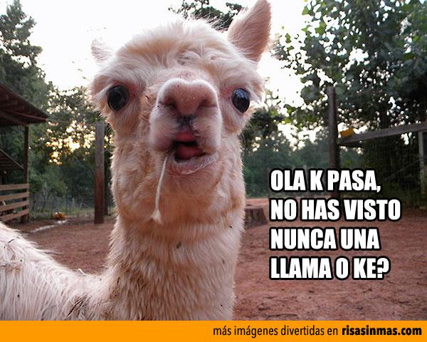Ola K pasa?