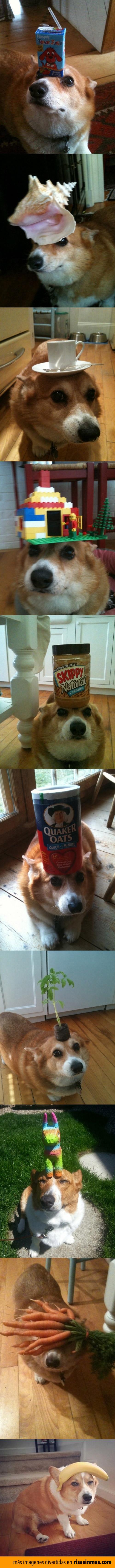 Perrito equilibrista