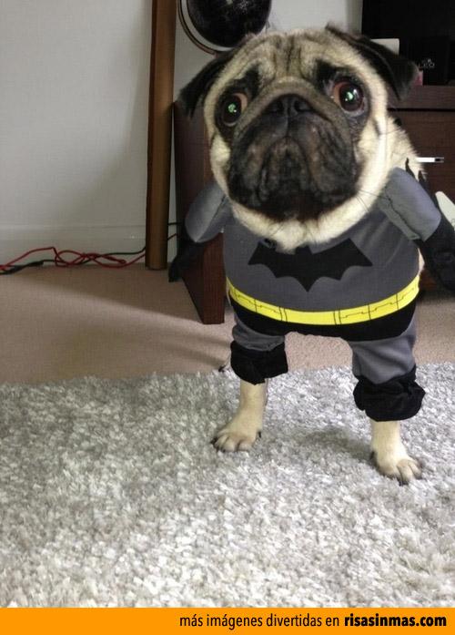 Pugman el nuevo superhéroe perruno