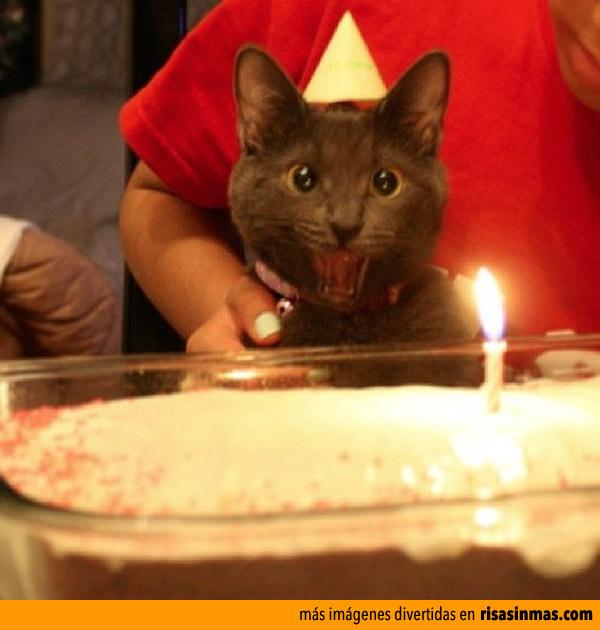 Soplando el pastel de cumpleaños