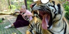 Tigre atacado por una mujer