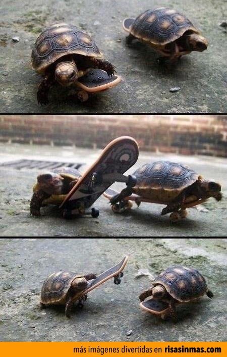 Tortugas haciendo Skate